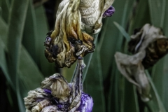 Dead Flowers 3