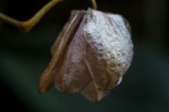 Dead Flowers 4